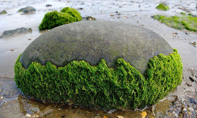 Rettenet a parton: orrfacsaró a bűz, az állatok elpusztulnak