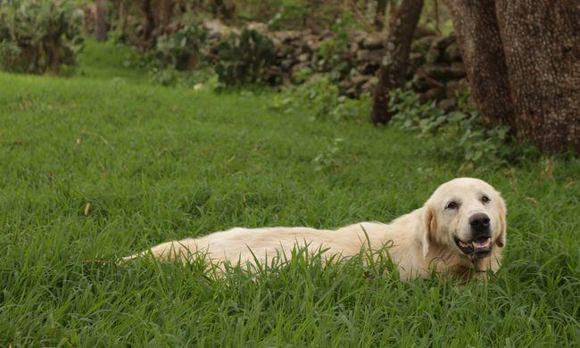 Száz kilométert utazott a veszprémi kutyus, egyedül szállt vonatra