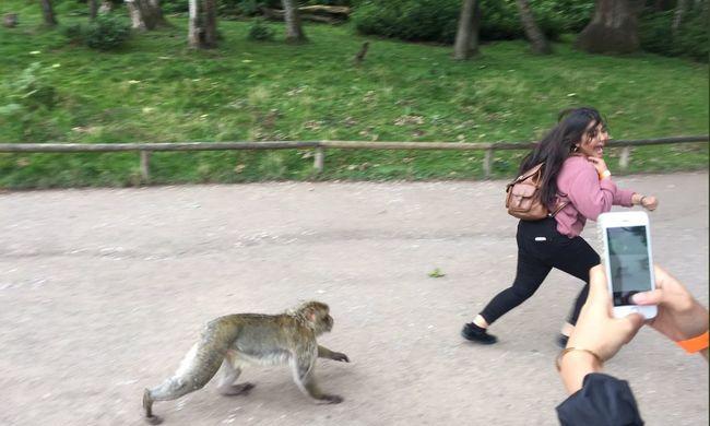 Az egész internet ezen röhög: egy lány és egy majom kellett hozzá