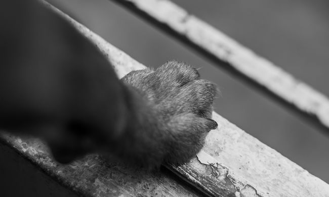 Hagyta volna éhen halni kutyáit a magyar férfi, az állatok bordái szinte átszúrták bőrüket