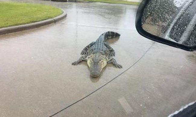 Ez rémisztő: vadállatok bukkantak fel az utcákon a pusztító vihar miatt