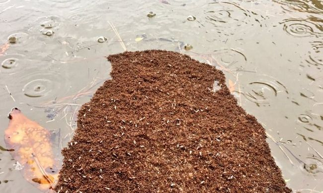 Lenyűgöző látványt nyújtanak az áradás elől menekülő állatok - fotók