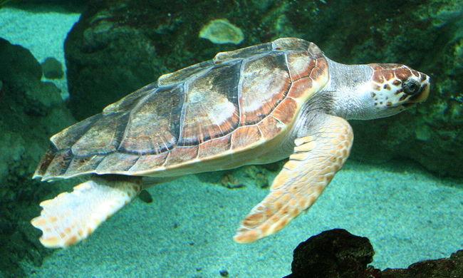 Ritka jelenség a tengerparton: az állatok halálát okozó anyag az emberre is veszélyes