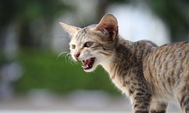 Eluralkodott a káosz a szigetországban, macskák miatt halnak ki az állatok