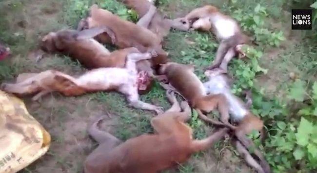 Döbbenetes látvány: egyszerre kapott szívrohamot 12 állat