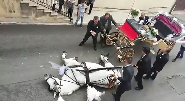 Romantikus esküvőt akartak, de kimerülten ájult el az út közepén a lovuk