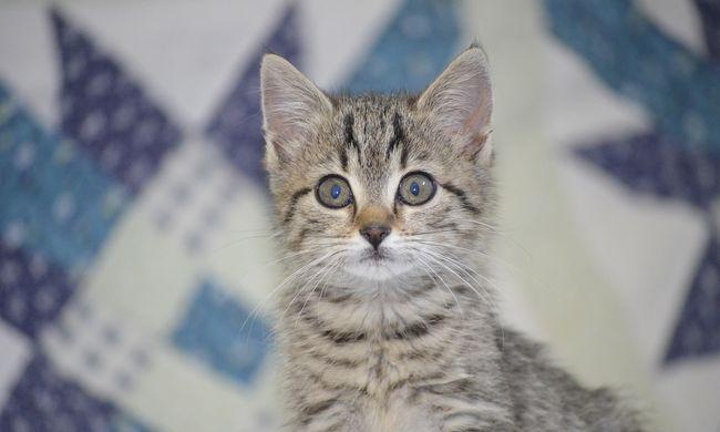 Mérgező rém ólálkodik a János Kórháznál, sorra öli a macskákat