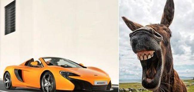Répának nézte a szamár a luxusautót, ezért belekóstolt