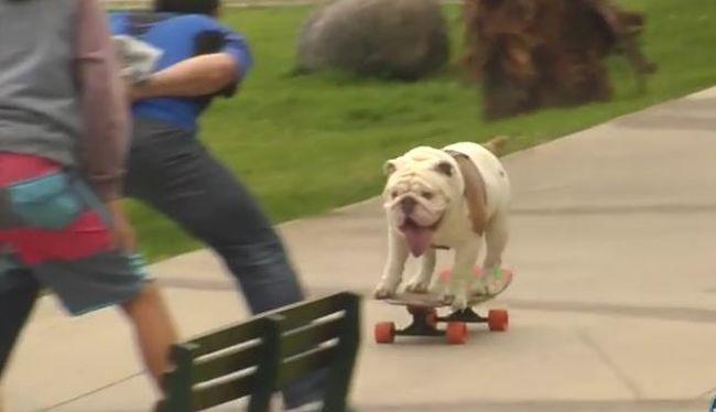 Itt a nap videója: különleges rekordot döntött ez a lelkes kutyus