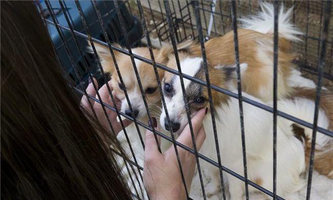 Saját ürülékükben tartotta a 150 kutyát a söjtöri nő