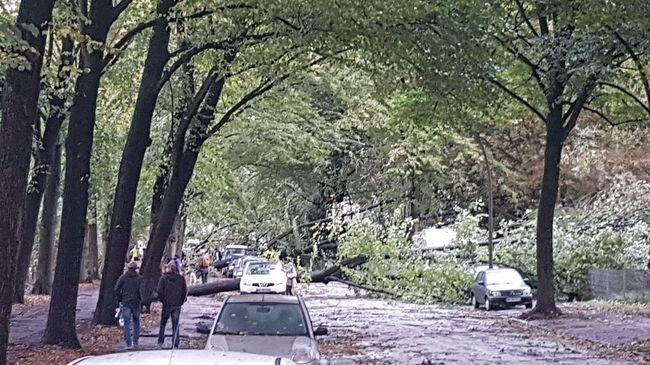 Lecsapott a vihar, többen életüket vesztették a kidőlt fák alatt