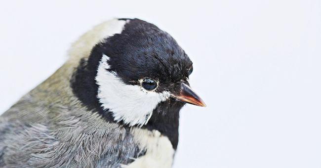 Ijesztő felfedezés: tele volt korommal a levegő, a madarak tolla összekoszolta a tudósok kezét