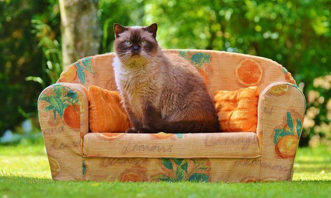 Hátborzongató képességgel rendelkezik az idősek otthonában élő macska