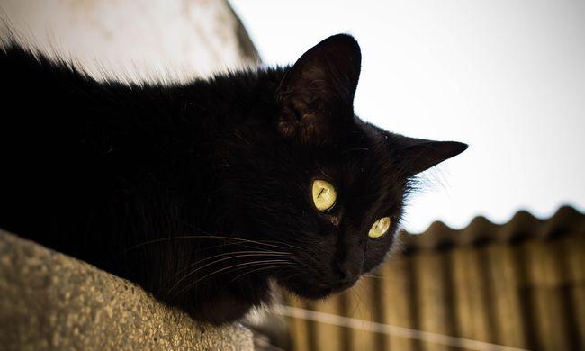 Nem semmi videó: az összes macska egyszerre érezte meg a közelgő földrengést