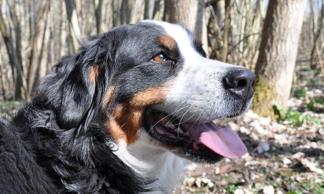 Szánkózó kutyus az internet sztárja - videó