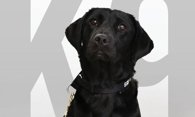 Kirúgták munkahelyéről Lulut, a kutyát, de új életet kezdhet