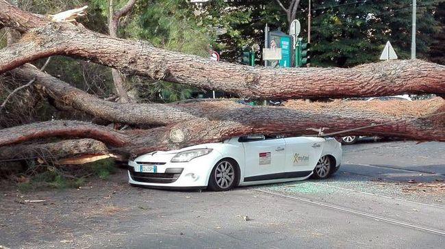 Utasokat szállító taxira dőlt a fa
