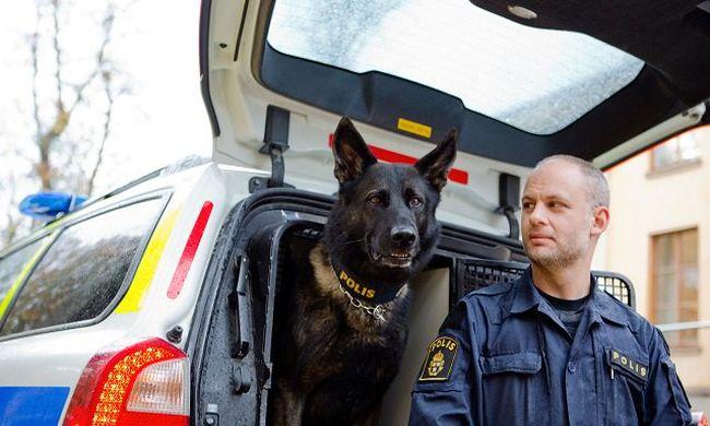 Hőstettet hajtott végre, nemzeti kitüntetést kapott a rendőrkutya