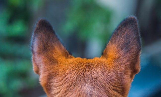 Brutális állatkínzás: élő céltáblának használták a kutyát, puskával lőttek rá