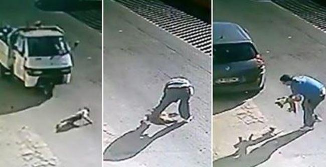 Direkt ütötte el a kutyát a kamionos, hagyta az állatot az úton szenvedni