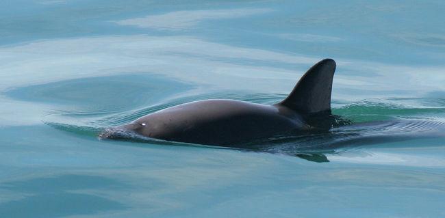 Temzébe tévedt egy delfin, holtan sodorta partra a víz