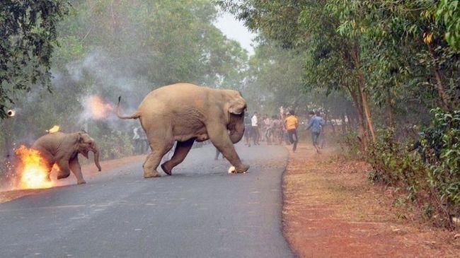 Az év legkétségbeejtőbb fotója: egy felgyújtott kiselefánt rohan az életéért