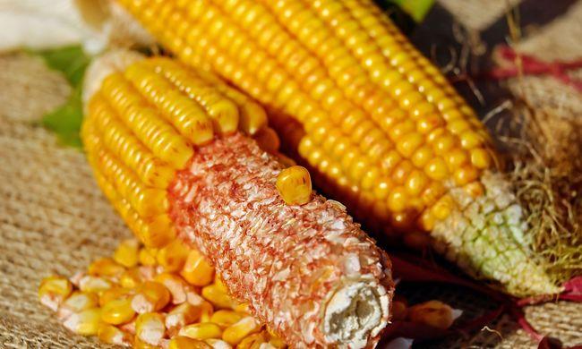 Kukoricaszemek alatt halt meg egy férfi