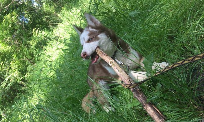 Budapesti rendőrök mentették meg a kiskutyát erőszakos gazdájától
