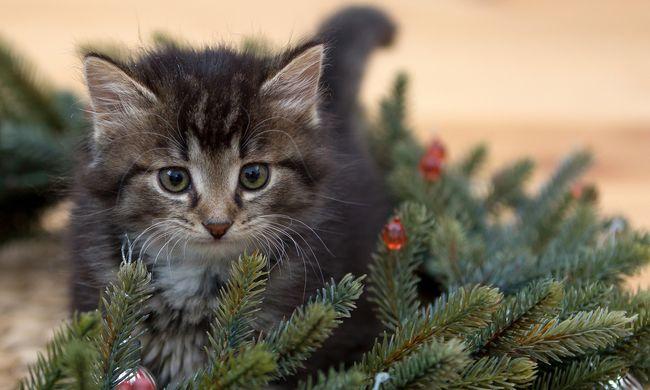 Izzasztó képrejtvény: Ön megtalálja a rejtőzködő cicát?