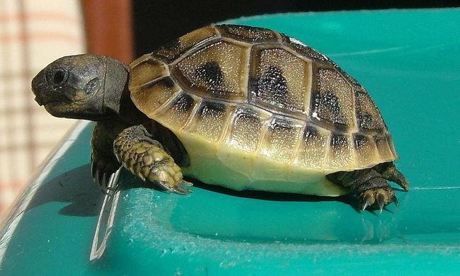 Több tucat védett hüllőt loptak el, egy valamit kért az állatkert a tolvajoktól