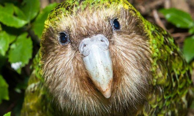 Nyoma veszett a híres madárnak, aki párosodni akart egy filmessel a forgatáson