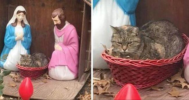 Ennél cukibb ma nem lesz: íme a macska, aki Jézusnak képzeli magát