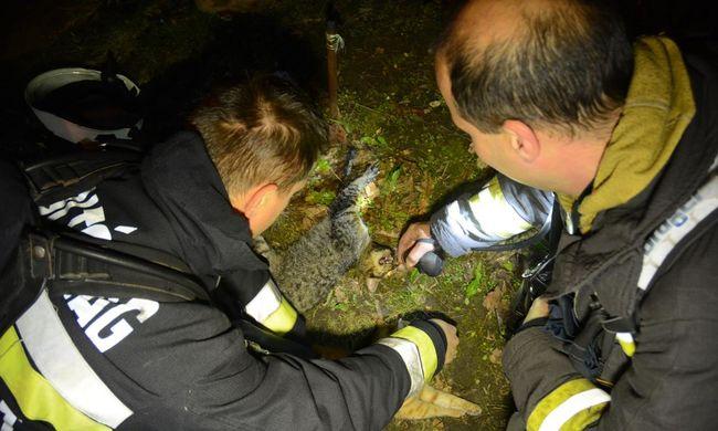 Tűz ütött ki a lakótelepen: bajba jutott macskákon segítettek a magyar tűzoltók