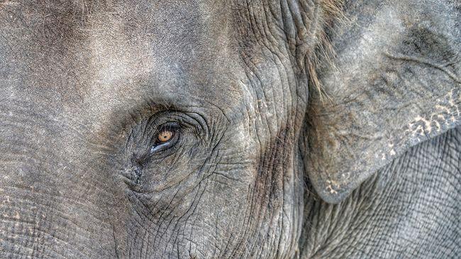 Falubeliek bukkantak a hatalmas tetemekre, a lelógó villanyvezeték végzett az elefántokkal