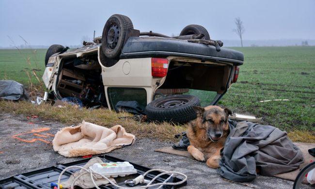 Öngyilkos lett a sofőr Apostagnál, kutyája kitartóan várt rá