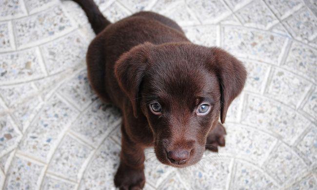 Játékos kutya miatt gyulladt ki a ház