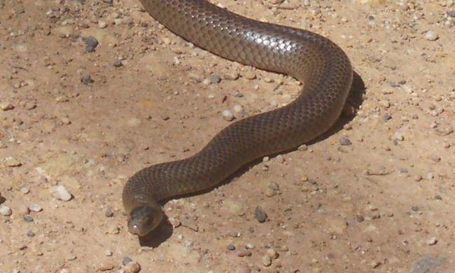 Rémisztő, mire bukkantak egy ausztrál iskola homokozójában