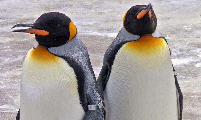 Annyira hideg van, hogy még a pingvineket sem engedik ki