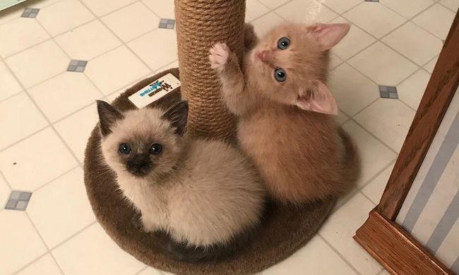 Fogadott testvérének köszönheti az életét, a cicák azóta is elválaszthatatlanok