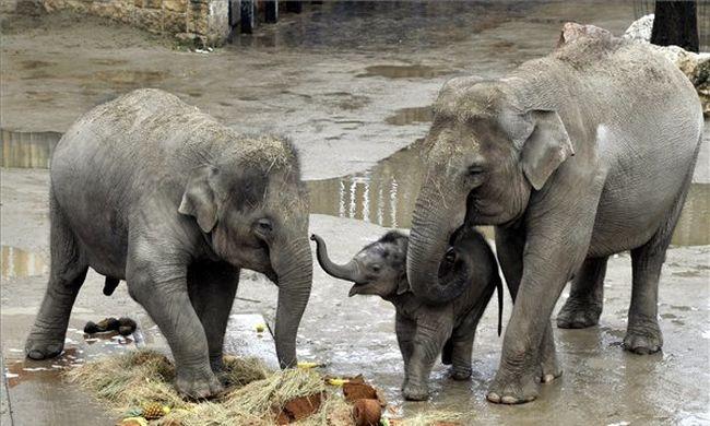 Nem kegyelmezett az elefánt: halálra tiporta a férfit