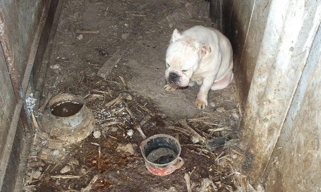 Borzasztó körülmények: éheztette és koszban tartotta kutyáit egy kocséri férfi