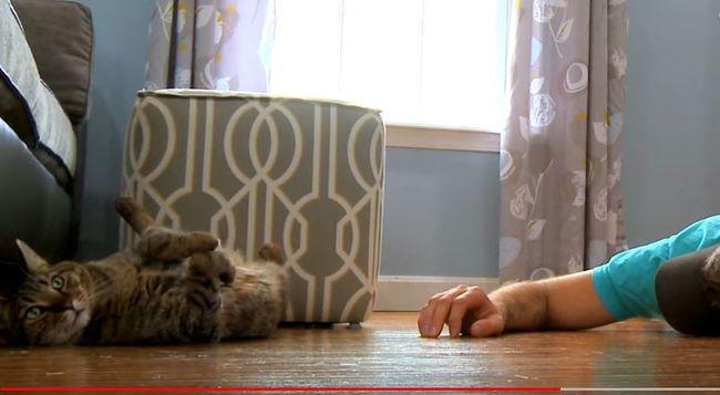 Elképesztő videó: ezt művelik a cicák, amikor gazdájuk halottnak tetteti magát
