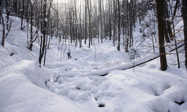 Tragikus munkabaleset történt: holtan esett össze egy erdész
