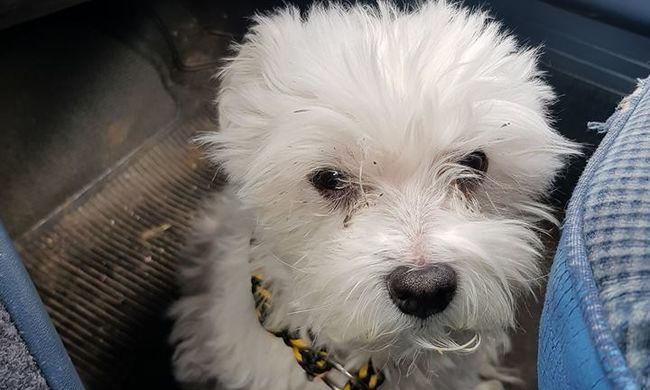 Újabb megrázó eset: kutyája őrizte az újpesti nő holttestét