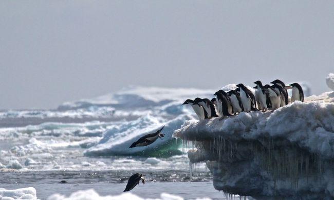 Elképesztő módszerrel találtak rá az eddig sosem látott pingvinkolóniára