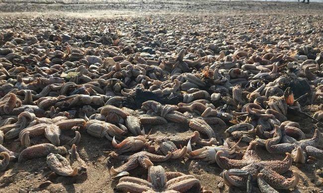 Megrendítő látvány: szőnyegként borították a tetemek a partot