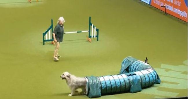 Kivívta a közönség imádatát a kutyus, akinek fogalma sem volt róla, hogy működik a verseny