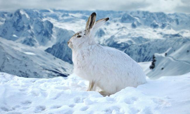 Láncolatot indít el, ha ezeknek az állatoknak bajuk esik - így hat a klímaváltozás