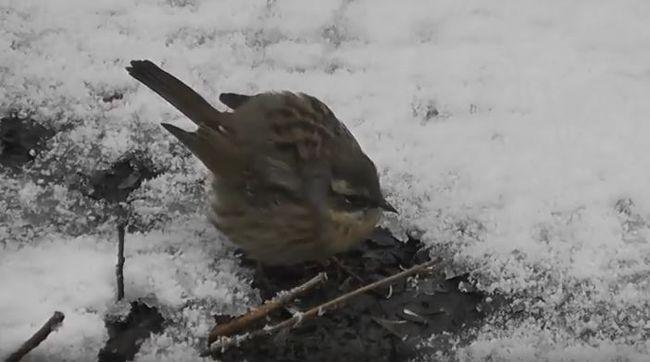 Szokatlan felfedezés: új madárfaj jelent meg Magyarországon