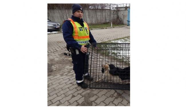 Megható intézkedés: rendőrök segítettek az elütött kunszentmártoni kutyuson